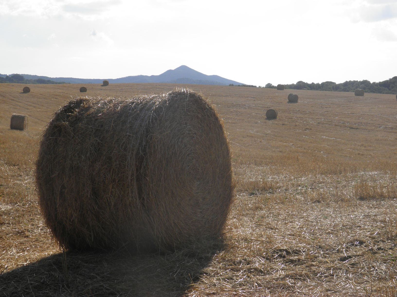 hay bails in a field Le Selvole Farmhouse